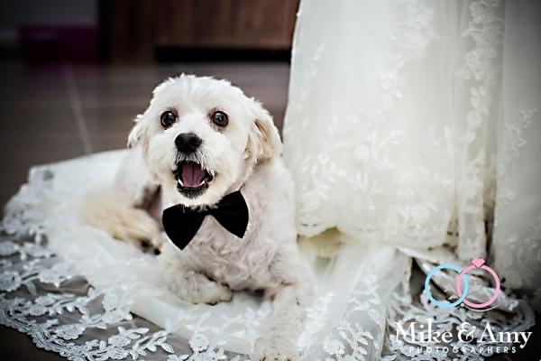 Wedding CHR-296
